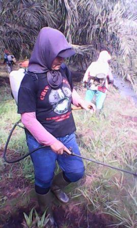 Perempuan Terpapar Pestisida